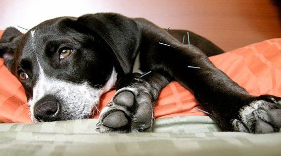 agopuntura cani e gatti