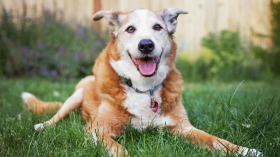 visita gratuita cani anziani