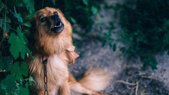 basta cani alla catena