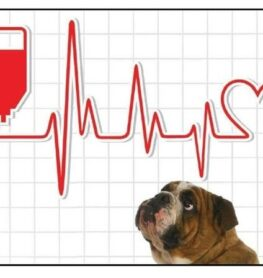 Cani donatori di sangue