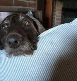 espressione occhi cane