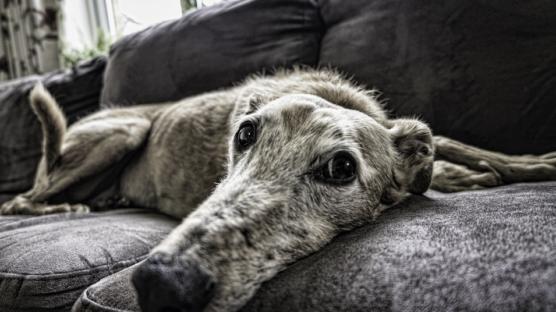 prevenzione malattie cane anziano